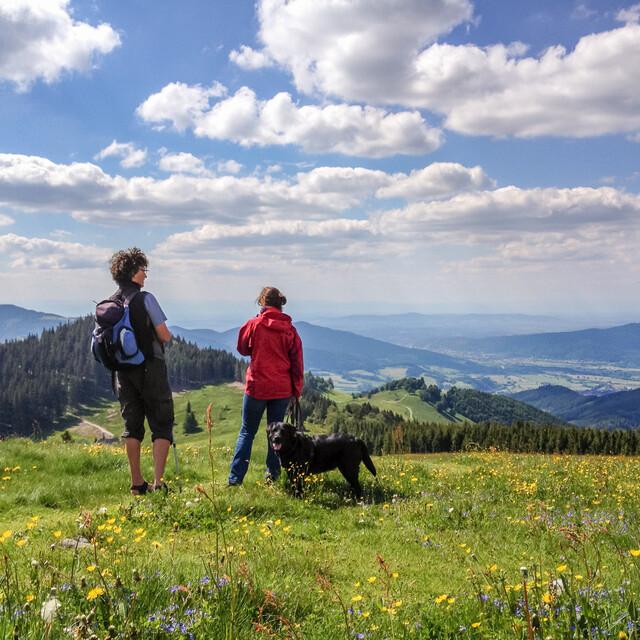 Auf dem Hinterwaldkopf oberhalb von Kirchzarten